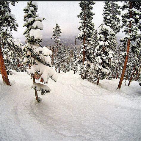 Visit Colorado on Instagram: Slaying #pow in #MaryJane