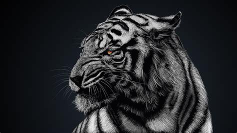 tigre blanco fondo de pantalla  ultra hd id