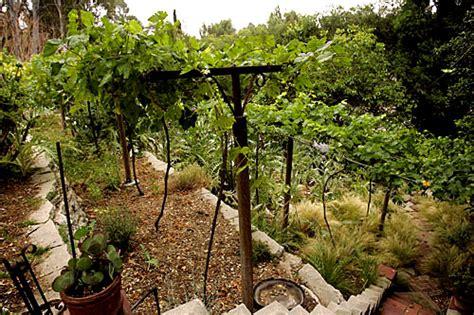 Virtual Garden Tour A Frontyard Vineyard In Pasadena L