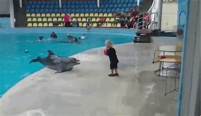 Dolphin Playing Dolphins Play Humans Relationship Sea