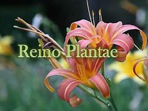 Reino Animalia Related Keywords - Reino Animalia Long Tail ...