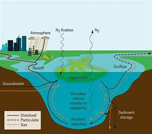 A Graphic Showing How Phosphorus And Nitrogen Enter Into A