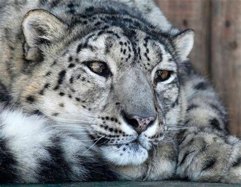 jeux de cuisine gratuit fille tigre blanc