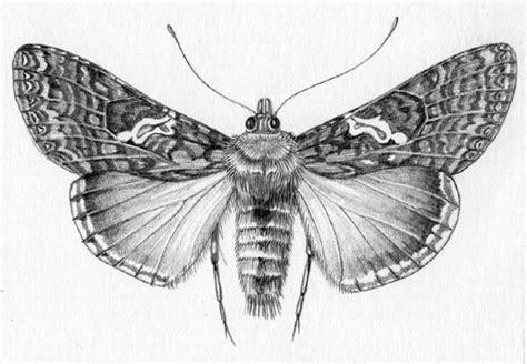 pin  denushi kalutota  art   insect art moth