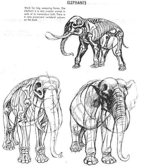 images  animal anatomy   creatures