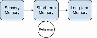 Processing Memory Cognitive Theory Atkinson Shiffrin Term