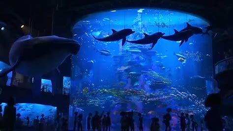 aquarium dans le calvados top 5 n 176 763 les aquariums allocin 233
