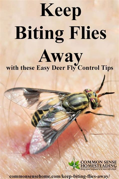 deer fly control  deterrent tips   biting flies