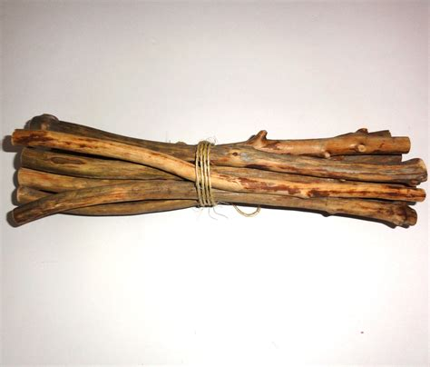 Decorative Twigs Branches. Old Wood Pine Tree Twigs. Natural