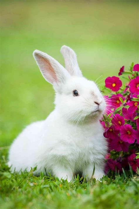 Cosa Mettere Nella Gabbia Coniglio by Sognare Conigli Significa Interpretazione E Numeri