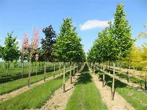 Arbres Fruitiers Nains En Pleine Terre : notre production p pini res chatelain ~ Premium-room.com Idées de Décoration