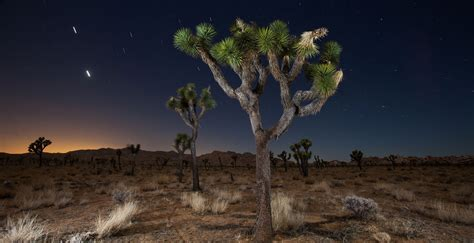 Joshua Tree National Park Vacation Travel Guide And Tour