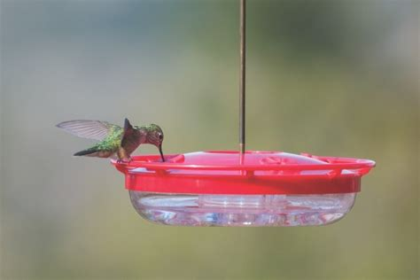 birds unlimited hummingbird feeder birds unlimited multiply hummingbird feeders attract