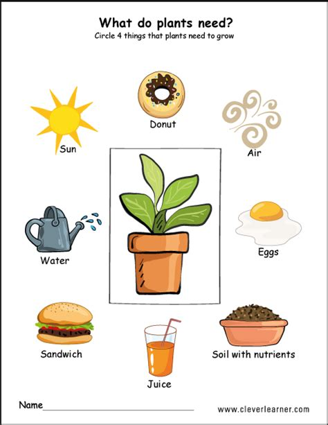 what do plants need to grow worksheet 2 worksheet