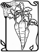 Coloring Carrot Pages Seed sketch template