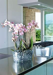 Grand Bac Pour Orchidées : cassetta clivo horomidis agronomic corp ~ Melissatoandfro.com Idées de Décoration