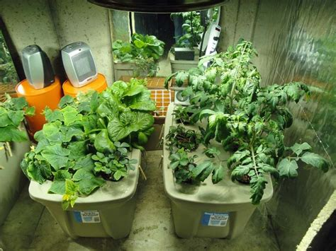 Best Indoor Diy Hydroponic Gardening Images On