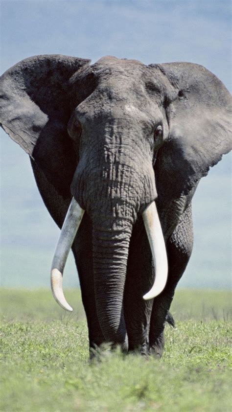 elephant wallpaper iphone gallery