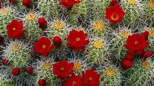 Cactus Desktop Wallpapers - Top Free Cactus Desktop