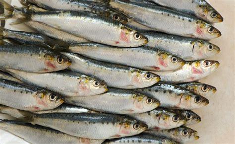 cuisiner des sardines fraiches sardines au barbecue comment les réussir cuisine à l 39 ouest