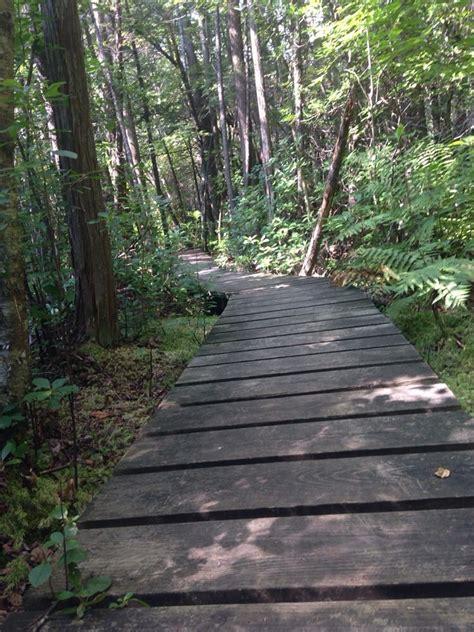 mass audubon broad meadow brook wildlife sanctuary