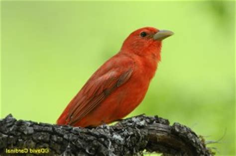 pictures of birds in the hill country of texas hill country april birds landscape photo safari last minute openings