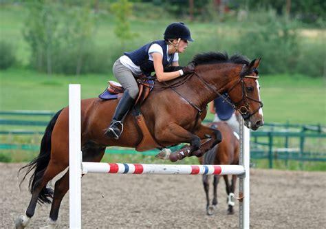 horse jumping horses jump equestrian jumps horseback
