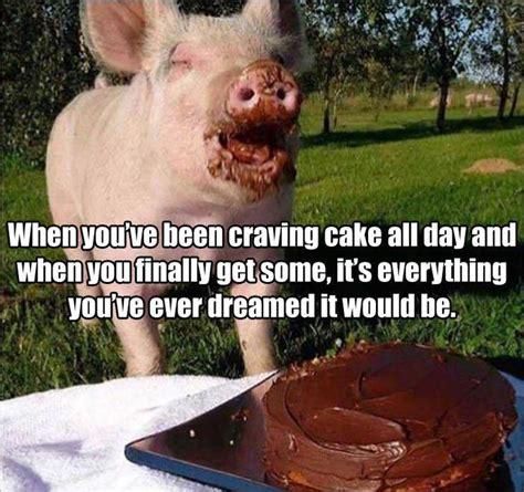 images  amy swinehouse  pig newton