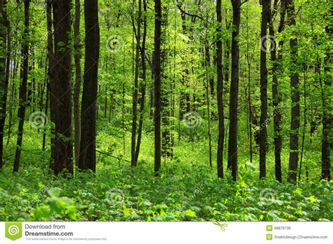 thick green forest stock photo image