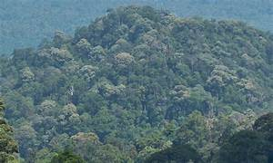 Differences Between Primary And Secondary Rainforest