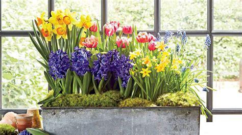Tulpen Pflanzen Balkon by Blumen Pflanzen Balkon Wohndesign