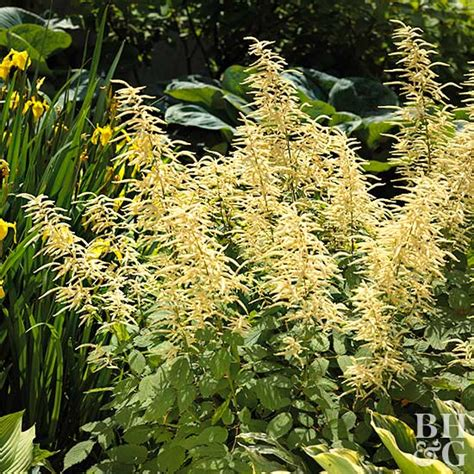 plants of the northwest 15 top native plants of the pacific northwest