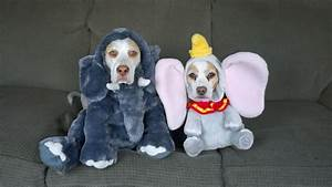 An Amusing Compilation of Costumes Worn by Maymo the Dog ...