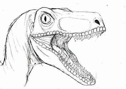 Velociraptor Raptor Coloring Cabeza Bright