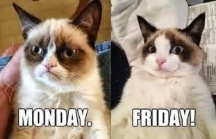 grumpy cat monday grumpy cat monday vs friday flickr photo