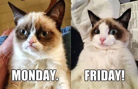 Grumpy Cat Monday Meme - grumpy cat monday vs friday flickr photo sharing