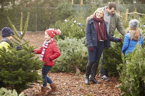 christmas tree care tips for choosing a tree petal talk