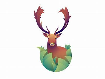 Fallow Deer Dribbble