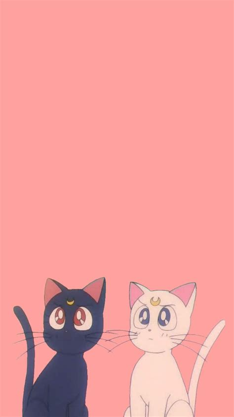 aesthetic cat wallpapers