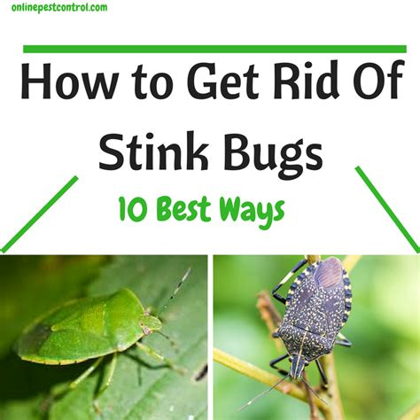 how to get rid of bugs in your garden how do bed bugs get into your house 28 images preparation for fumigation ppt video online