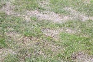 Rasen Nach Düngen Gelb : vertrocknete pflanzen aufp ppeln so retten sie verdorrte exemplare ~ Markanthonyermac.com Haus und Dekorationen