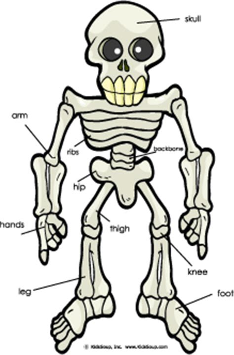 spooky bones and skeletons activities craft and song 680 | Sceleton Poster