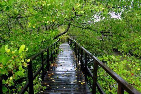 wisata hutan mangrove surabaya info sewa villa