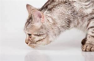 Enlever Odeur Urine Chien : eau de javel urine chien ~ Nature-et-papiers.com Idées de Décoration