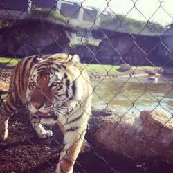 LSU Mascot Mike the Tiger Habitat