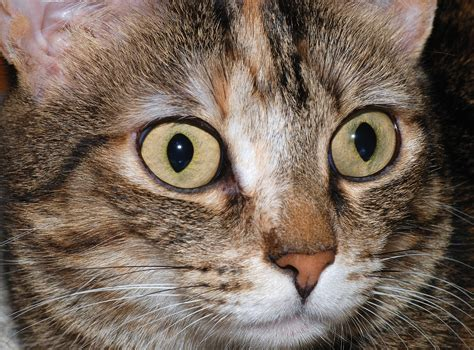 How To Keep Your Cat's Eyes Healthy  Cat Diabetes & Cat Care