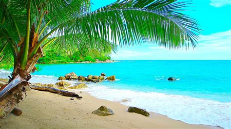 Tropical Island Beach Ambience Sound  Ocean Sounds And