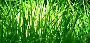 Semer Gazon Periode : quel gazon semer une pelouse en bonne sant d sherber ou ~ Melissatoandfro.com Idées de Décoration