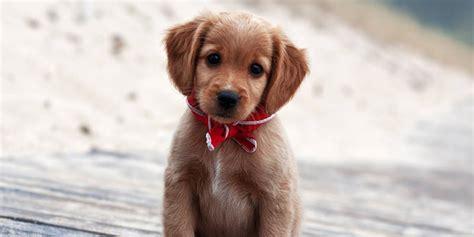 jeux de cuisine virtuel les photos de chiens les plus mignons du toute l actu jeux 2 filles