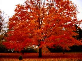 soul amp autumn tree photos in a drizzling in wisconsin and an autumn tune free